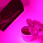 Bioledex GoLeaf Cannabis LED Grow-Leuchte für Hanfpflanzen 450-660nm